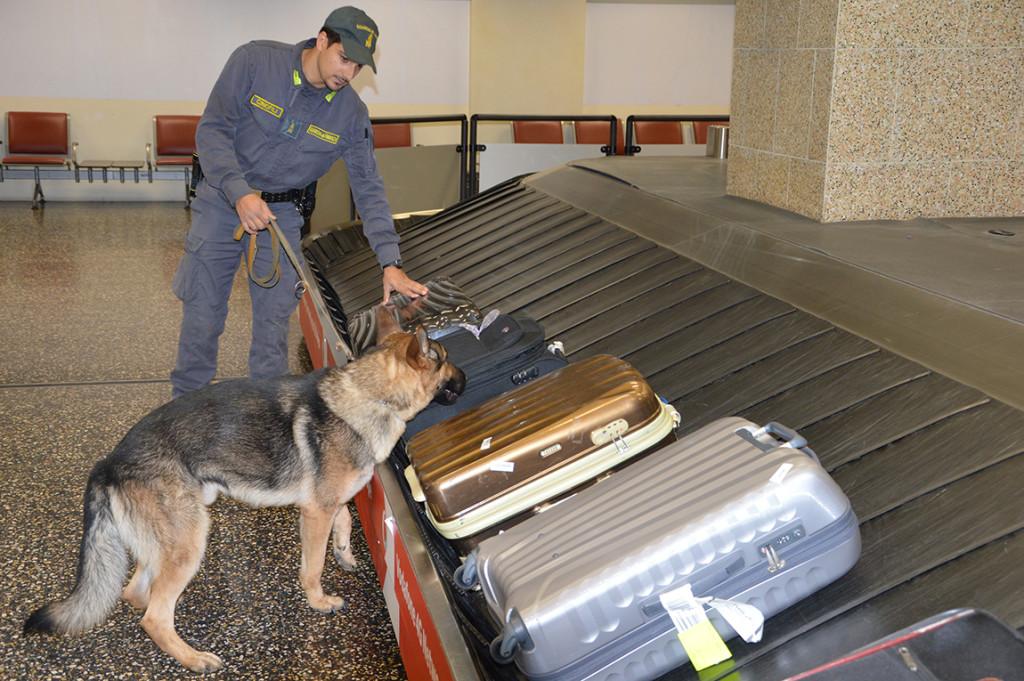 "Malpensa, maxi-operazione ""Carioca"": arrestati 8 narcotrafficanti e 7,5kg di cocaina"