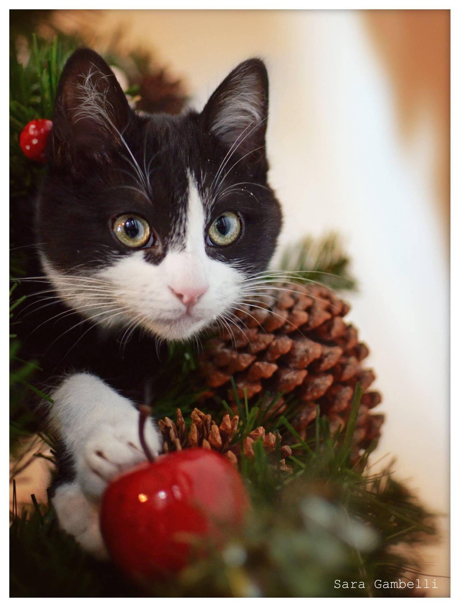 Immagini Natale Con Gatti.I Nostri Migliori Auguri Di Buon Natale Con Le Foto Canine E
