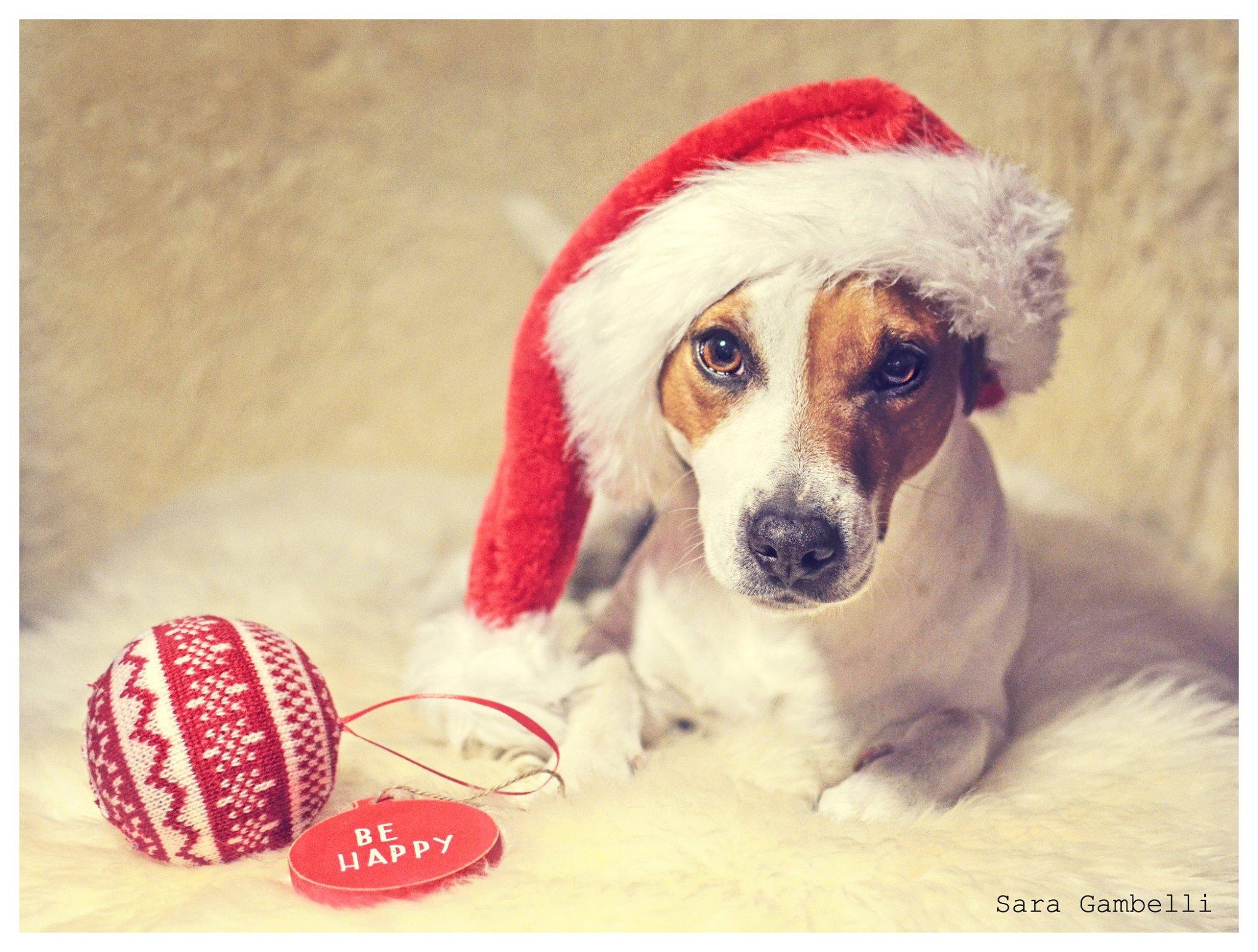 Immagini Natalizie Con Cani.I Nostri Migliori Auguri Di Buon Natale Con Le Foto Canine E