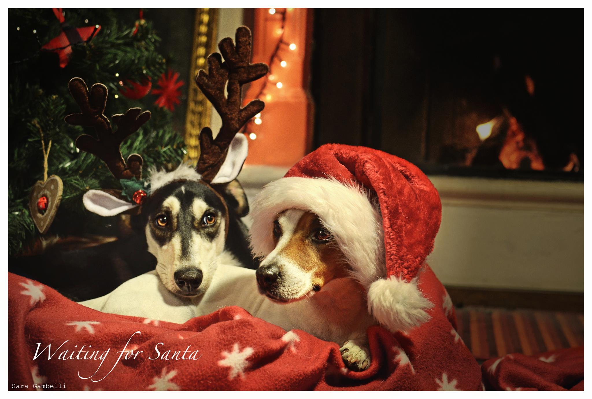 I nostri migliori auguri di Buon Natale con le foto canine e feline di Sara Gambelli