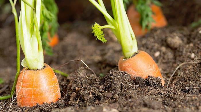 Legambiente: agricoltura bio in crescita in Italia. La Lombardia sotto la media nazionale