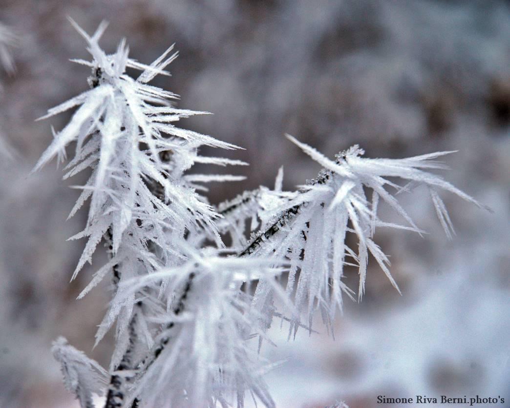Veddasca, le spettacolo della neve a Galaverna nelle foto di Simone Riva Berni