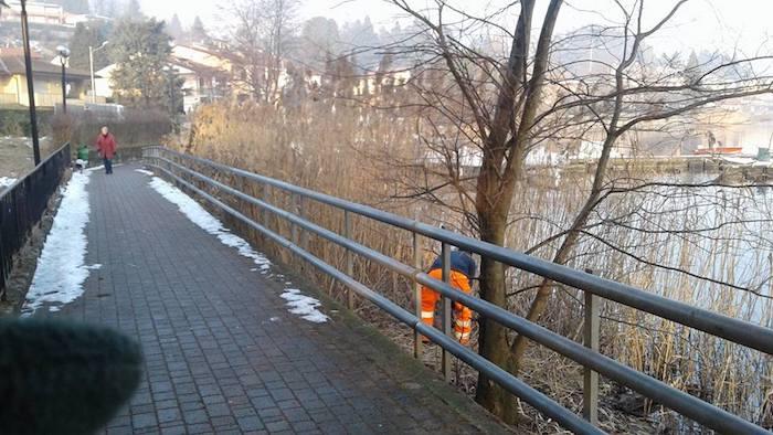 Lavena Ponte Tresa, al via la pulizia del lungolago e il taglio del canneto