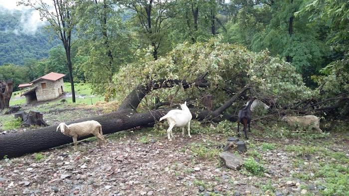 Rifugio Animali Felici colpito dal maltempo.