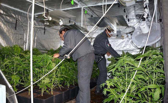 Sequestrate due piantagioni e 4kg pronti per lo spaccio. Arrestati due produttori di marijuana