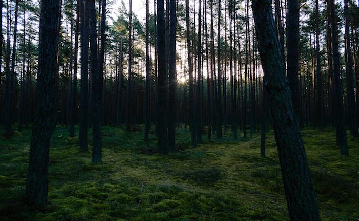 Cadavere nel bosco: legato a un albero e incappucciato
