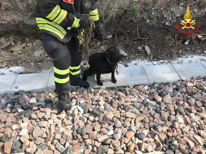 Maccagno con Pino e Veddasca, i vigili del fuoco salvano un cane. Era rimasto incastrato