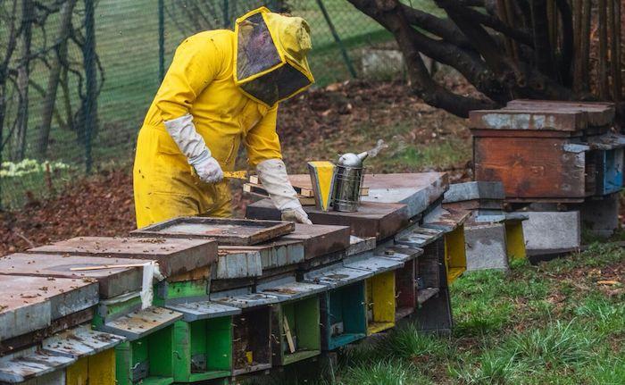 Veddasca, miele: l'oro delle Prealpi di William Magnocavallo