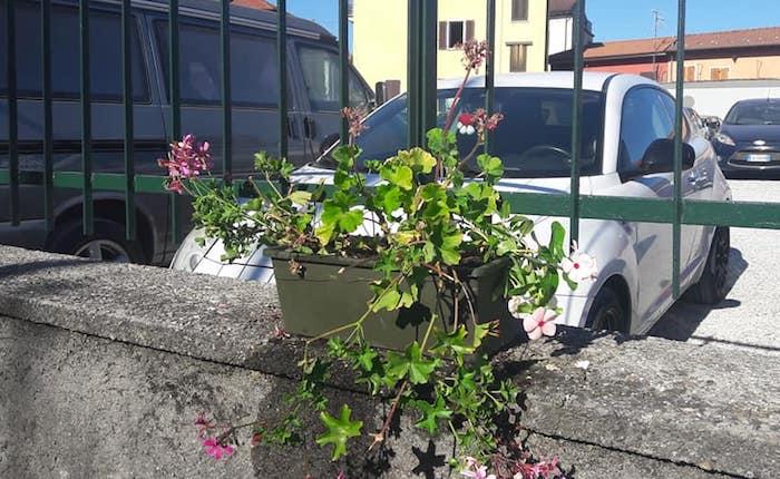 A Germignaga dopo i furti distrutti ancora i fiori. Crescono indignazione e rabbia