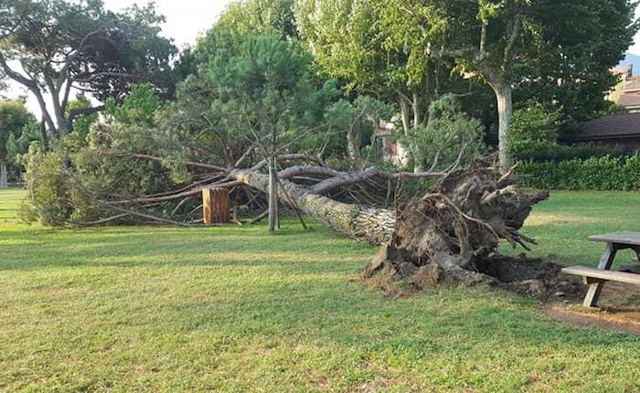 Temporale e vento forte, caduto un albero al Boschetto di Germignaga.