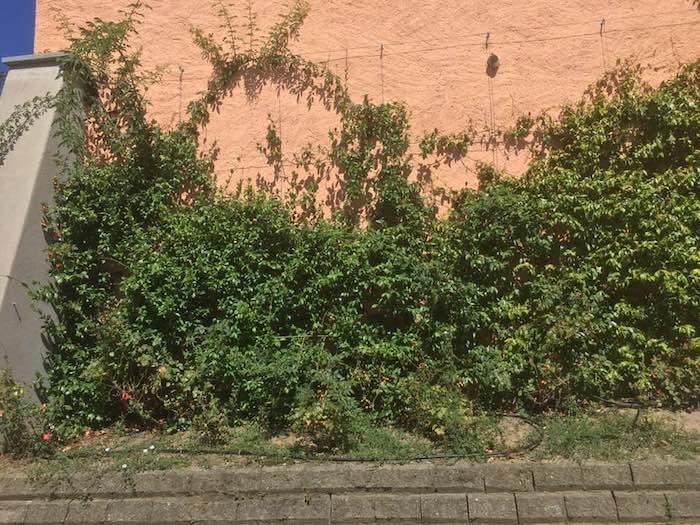 Dal cimitero di Luino a piazza Tolini, i cittadini chiedono maggior manutenzione