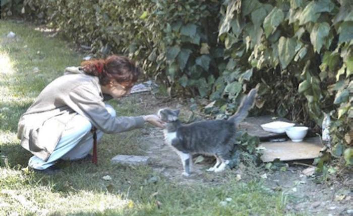 Amanti del gatto sito di incontri