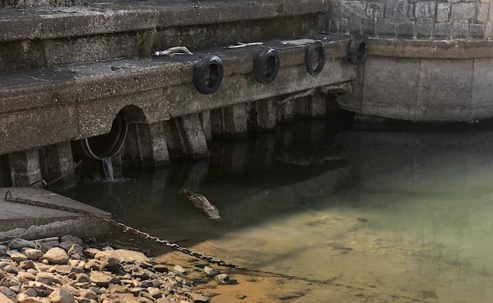 Ancora sversamenti nel lago a Luino, liquami della fogna al Porto Lido