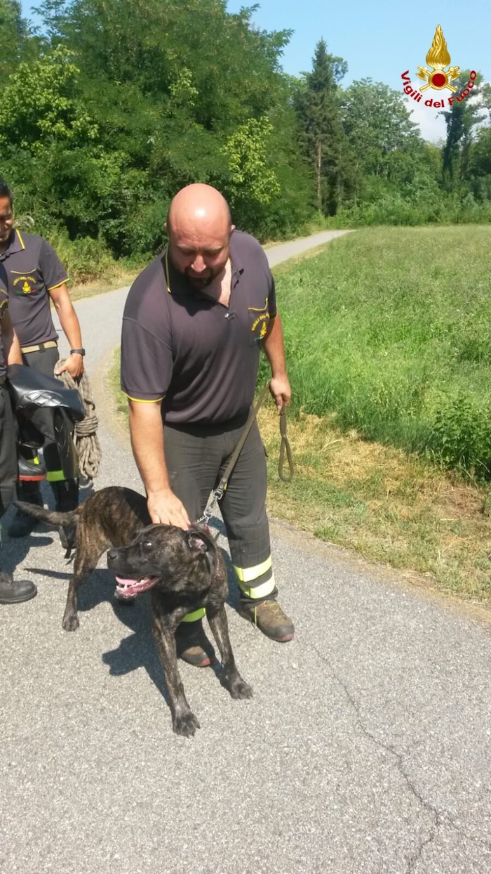 Il cane, rimasto intrappolato nel fiume Boesio, a Cittiglio, è stato riconsegnato alla proprietaria sano e salvo. Merito ai pompieri della provincia