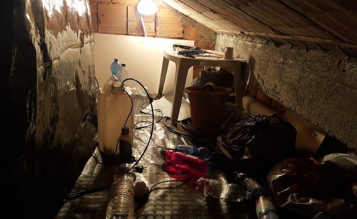 Coltivava marijuana in serra nel sottotetto di casa, arrestato 19enne