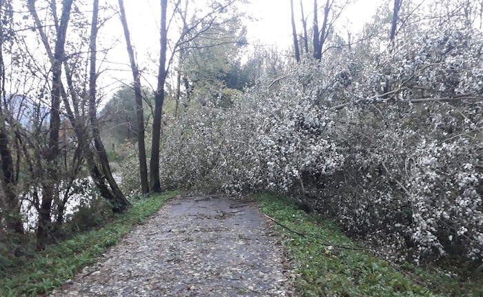 Il maltempo blocca anche la pista ciclabile, alberi tra Mesenzana e Cassano Valcuvia