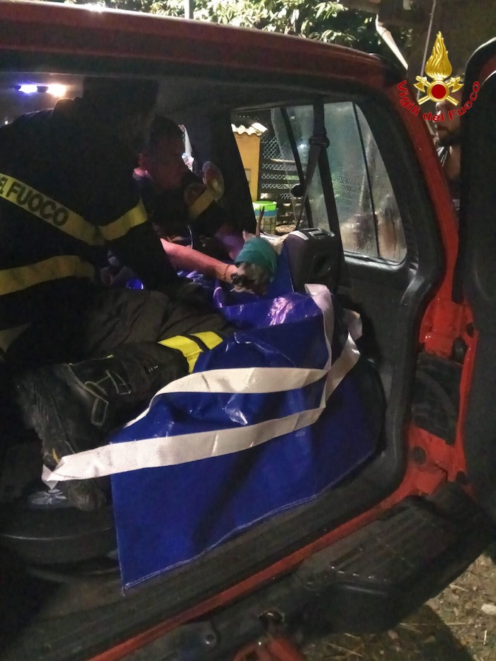 Capriolo ferito in strada, tratto in salvo ora si trova al