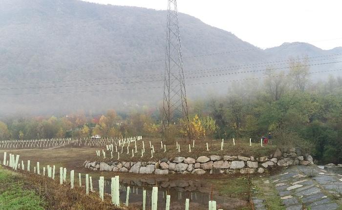 Un nuovo bosco sul fondovalle della Valcuvia, serie di interventi per migliorare l'ambiente