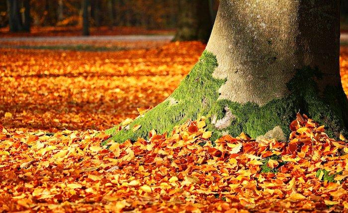 Riscaldamento globale: anche col bel tempo, non c'è un bel clima