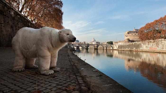 COP21: PRoma, Italia – L'orso polare di Greenpeace per le vie di Roma: un'attività di sensibilizzazione sui cambiamenti climatici in occasione della COP21 di Parigi. ©Francesco Alesi/Greenpeaceolar Bear in RomeUn orso polare a Roma