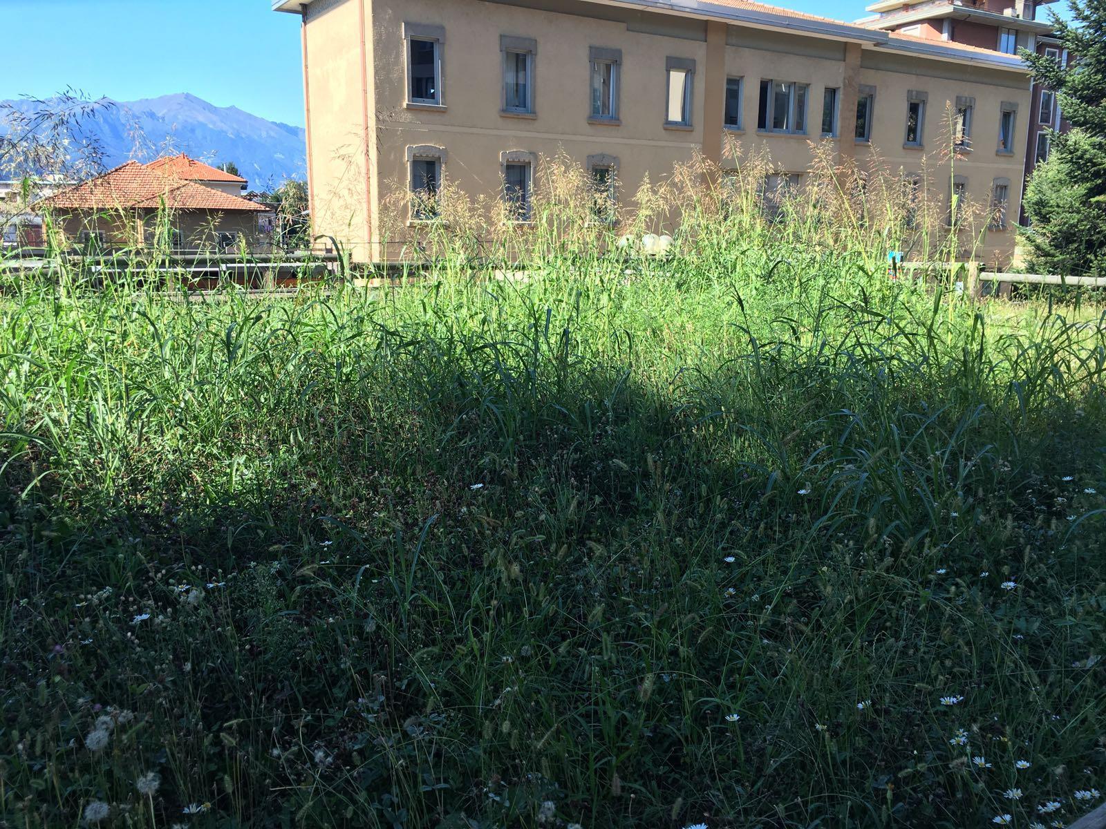 """Ospedale di Luino, """"Come mai il taglio dell'erba è previsto solo con l'arrivo dei politici? Questa la nostra quotidianità"""""""