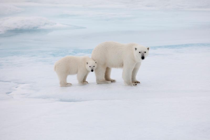 Natale: ecco il calendario Greenpeace 2017, per un nuovo anno più green