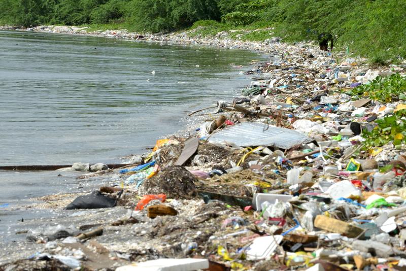 """Greenpeace: """"La plastica nel piatto, dal pesce ai frutti di mare"""""""