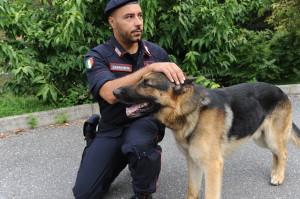Balton, il cane dell'unità cinofila che ha aiutato i Carabinieri ad arrestare il giovane 23enne