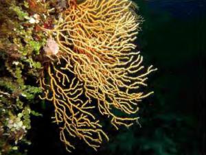 """Uno scatto da """"La qualità ambientale nell'area marina interessata dalla Costa Concordia"""""""