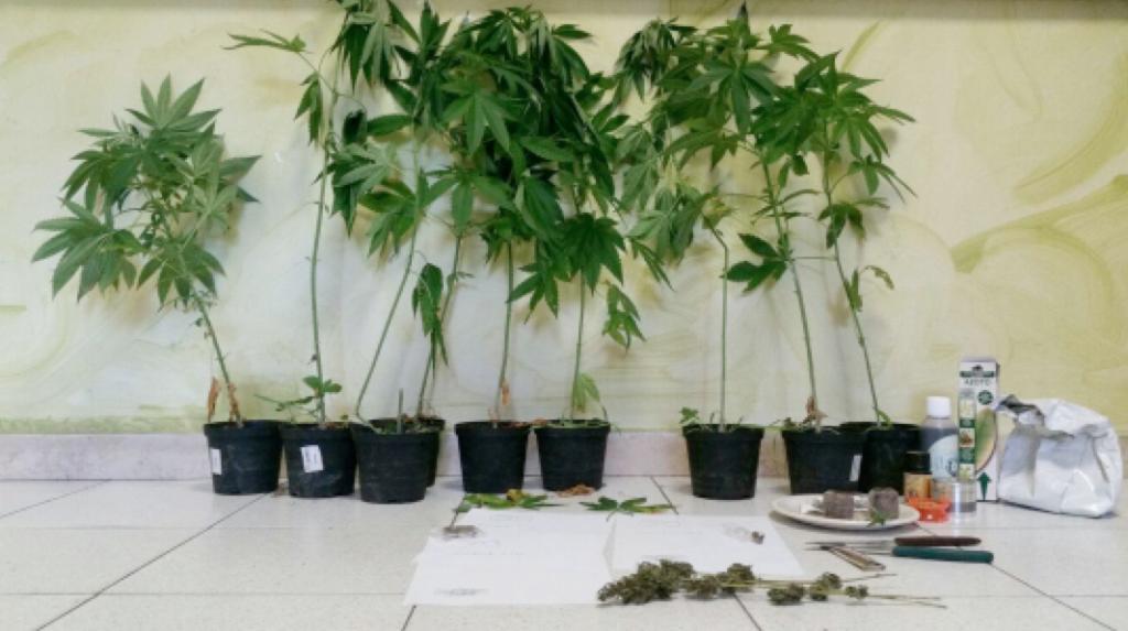Leggiuno, arrestato un 24enne: trovate in casa undici piante di marijuana