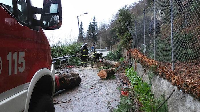 Cade albero a Cugliate: disagi su circolazione, corrente elettrica e telefonica