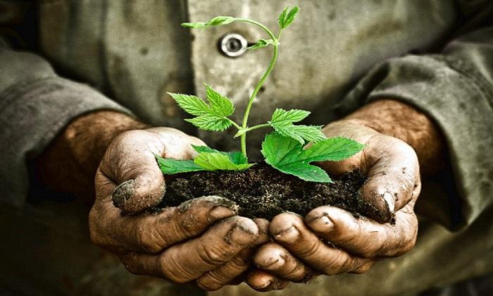 Alimenti bio e packaging green in crescita, il cibo sostenibile nel 2017
