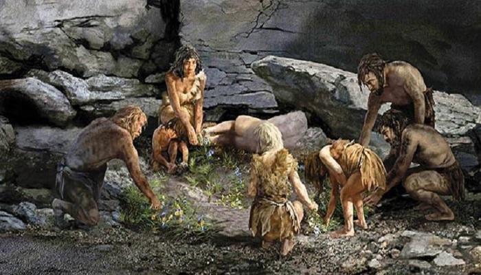 Neanderthal, scoperte cure della preistoria: mix di piante al posto di aspirine ed antibiotici