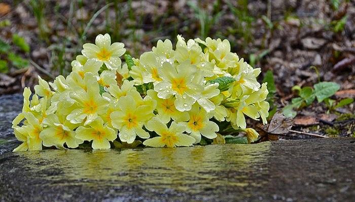 Marzo, piante già in fiore: mese più caldo di 3 gradi rispetto alla media