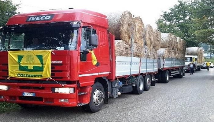 Amatrice, Coldiretti dona 50mila chili di paglia per sostenere l'alimentazione dei bovini
